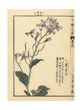White Radish, Raphanus Sativus Giclee Print by Bairei Kono