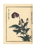 Violet, Viola Species Giclee Print by Bairei Kono