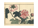 Fuyou or Double-Petaled Cotton Rose, Hibiscus Mutabilis Giclée-Druck von Bairei Kono