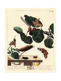 Silk Moth and Garden Tiger Moth on Mulberry Leaf Giclee Print by Moses Harris