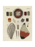 Butterfly Wing, Showing Structure, Skeleton, Scales Giclee Print