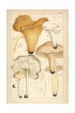 Golden Chanterelle, Gilled Mushroom, Waxy Cap and Scotch Bonnet Giclée-Druck von Mordecai Cubitt Cooke