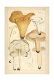 Golden Chanterelle, Gilled Mushroom, Waxy Cap and Scotch Bonnet Giclee Print by Mordecai Cubitt Cooke