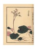 Creeping Saxifrage, Saxifraga Stolonifera Giclee Print by Bairei Kono