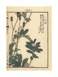 Lilac Squirrel, Sanguisorba Hakusanensis Giclee Print by Bairei Kono