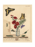 Swallowtail Butterfly, Papilio Machaon Giclee Print by Moses Harris