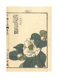 White Camellia, Camellia Japonica Giclee Print by Bairei Kono