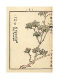 Japanese Cornelian Cherry, Cornus Officinalis Giclee Print by Bairei Kono