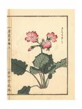 Japanese Primrose, Primula Sieboldii Giclee Print by Bairei Kono