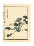 Violet, Viola Mandshurica Giclee Print by Bairei Kono