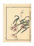 Japanese Stone Orchid, Dendrobium Moniliforme Giclee Print by Bairei Kono