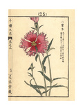 Fringed Pink, Dianthus Superbus Giclee Print by Bairei Kono