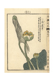 Japanese Water Lily, Nuphar Japonica Giclee Print by Bairei Kono