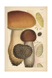 Porcino Mushroom, Birch Bolete, and Summer Truffle Giclee Print by Mordecai Cubitt Cooke