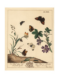 Meadow Brown Butterfly, Wood Lady and Grizzled Skipper Giclee Print by Moses Harris