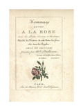 Calligraphic Title Page with Vignette of a Moss Rose Giclee Print by Mlle. Prudhomme