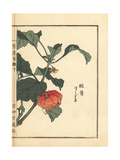 Chinese Lantern Plant, Physalis Alkekengi Giclee Print by Bairei Kono