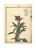 Chocolate Fritillary, Fritillaria Camschatcensis Giclee Print by Bairei Kono