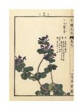 Henbit, Lamium Amplexicaule Giclee Print by Bairei Kono