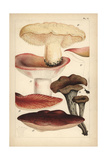 Wood Hedgehog, Flirt, Beefsteak Mushroom and Black Chanterelle Giclee Print by Mordecai Cubitt Cooke