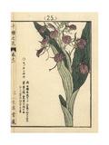 Liparis Orchid, Liparis Makinoana Giclee Print by Bairei Kono