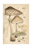 Pasture Mushrooms, Fragrant Funnel, and Aniseed Toadstool Giclee Print by Mordecai Cubitt Cooke