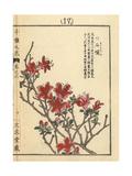 Kurume Azalea, Rhododendron Obtusum Giclee Print by Bairei Kono