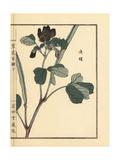 Ketsumei, Chinese Senna or Sicklepod, Senna Obtusifolia Giclee Print by Bairei Kono