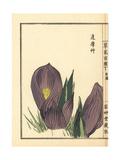 Zasensou or Symplocarpus Renifolius Giclee Print by Bairei Kono