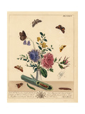 Frosted Orange Moth, Half Mourner, Ringlet, Barred Yellow, Etc Giclee Print by Moses Harris