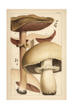 Forest Mushroom and Horse Mushroom Giclee Print by Mordecai Cubitt Cooke