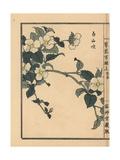 Shiroyamabuki or Black Jetbead, Rhodotypos Scandens Giclee Print by Bairei Kono