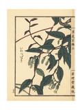 Iwatsubaki, Epigaea Asiatica Giclee Print by Bairei Kono