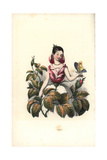 Rose Flower Fairy Giclee Print by Louis Lassalle