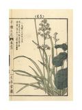 Tofieldia Nuda Var Furusei Giclee Print by Bairei Kono