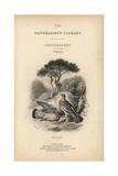 Title Page with Vignette of Wood Pigeons, Columba Palumbus Reproduction procédé giclée par Edward Lear