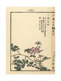 Chinese Milk Vetch, Astragalus Sinicus Giclee Print by Bairei Kono