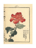 Chinese Hibiscus, Hibiscus Rosa-Sinensis Giclee Print by Bairei Kono