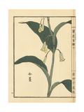 Amadokoro or Solomon's Seal, Polygonatum Odoratum Giclee Print by Bairei Kono