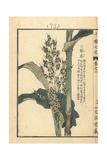 Corn, Zea Mays Giclee Print by Bairei Kono