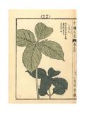 Serrate-Leaf Chloranthus, Chloranthus Serratus Giclee Print by Bairei Kono