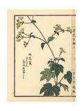 Ominaeshi or Yellow Patrinia, Patrinia Scabiosifolia Giclee Print by Bairei Kono