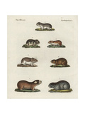 Mice, Hamsters and Mole Rats Giclee Print
