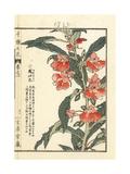 Garden Balsam, Impatiens Balsamina Giclee Print by Bairei Kono