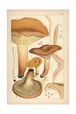 Weeping Milk Cap, Mild Milk Cap, Saffron Milkcap and Fairy Fingers Giclee Print by Mordecai Cubitt Cooke