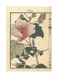 Cotton Rosemallow, Hibiscus Mutabilis, and Climbing Gentian Giclee Print by Bairei Kono