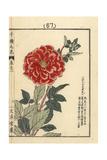 Tenjikubotan, Dahlia Species Giclee Print by Bairei Kono