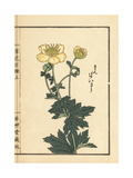 Asian Globeflower, Trollius Asiaticus Giclee Print by Bairei Kono