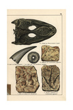 Fossil Skull, Tooth, and Footprints Giclee Print