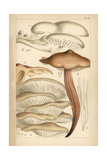 Porcelain, Spindleshank, Oyster Mushroom and Fairy Fingers Giclee Print by Mordecai Cubitt Cooke